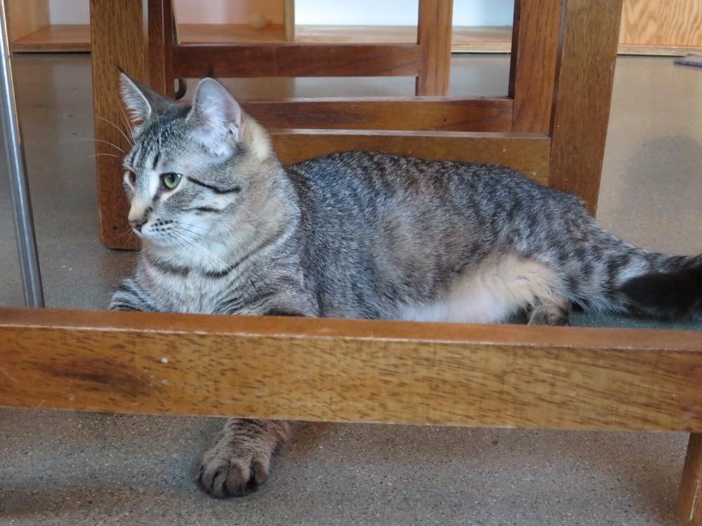 椅子の下で寝そべるネコ