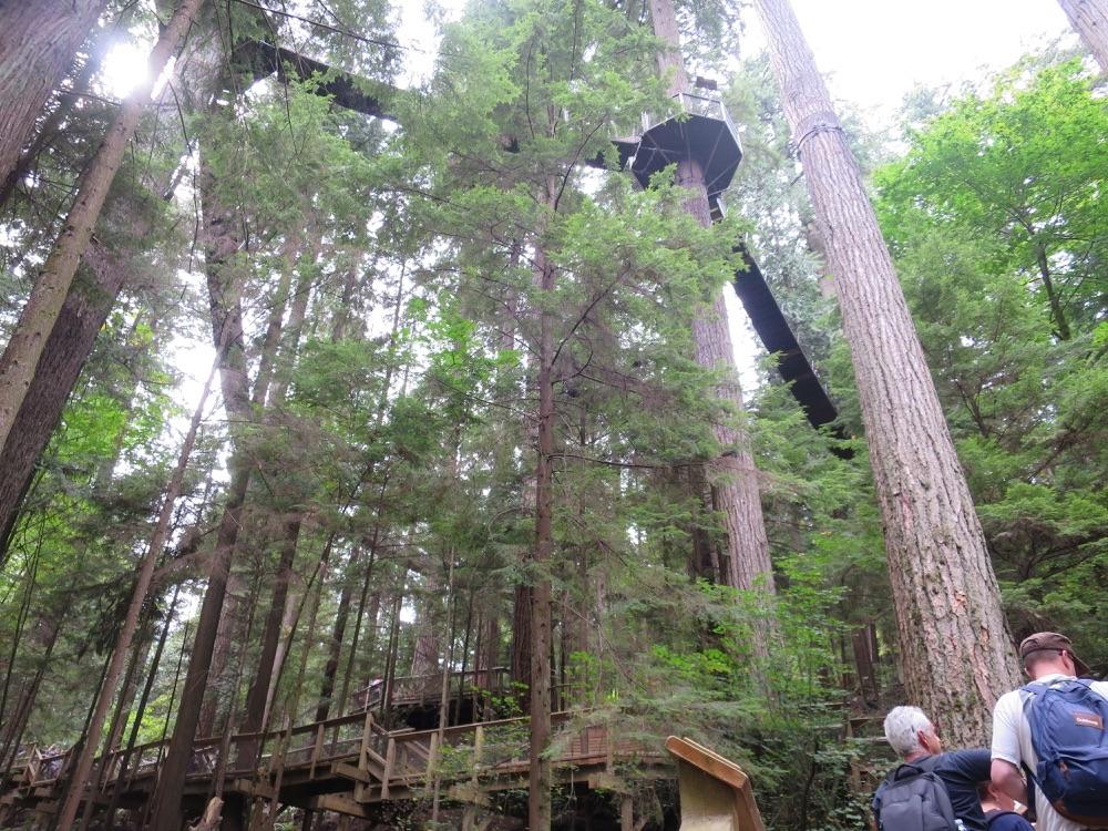 Tree Top Adventureの足場